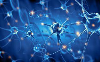 新研究揭示 成年后人类大脑神经元仍可再生