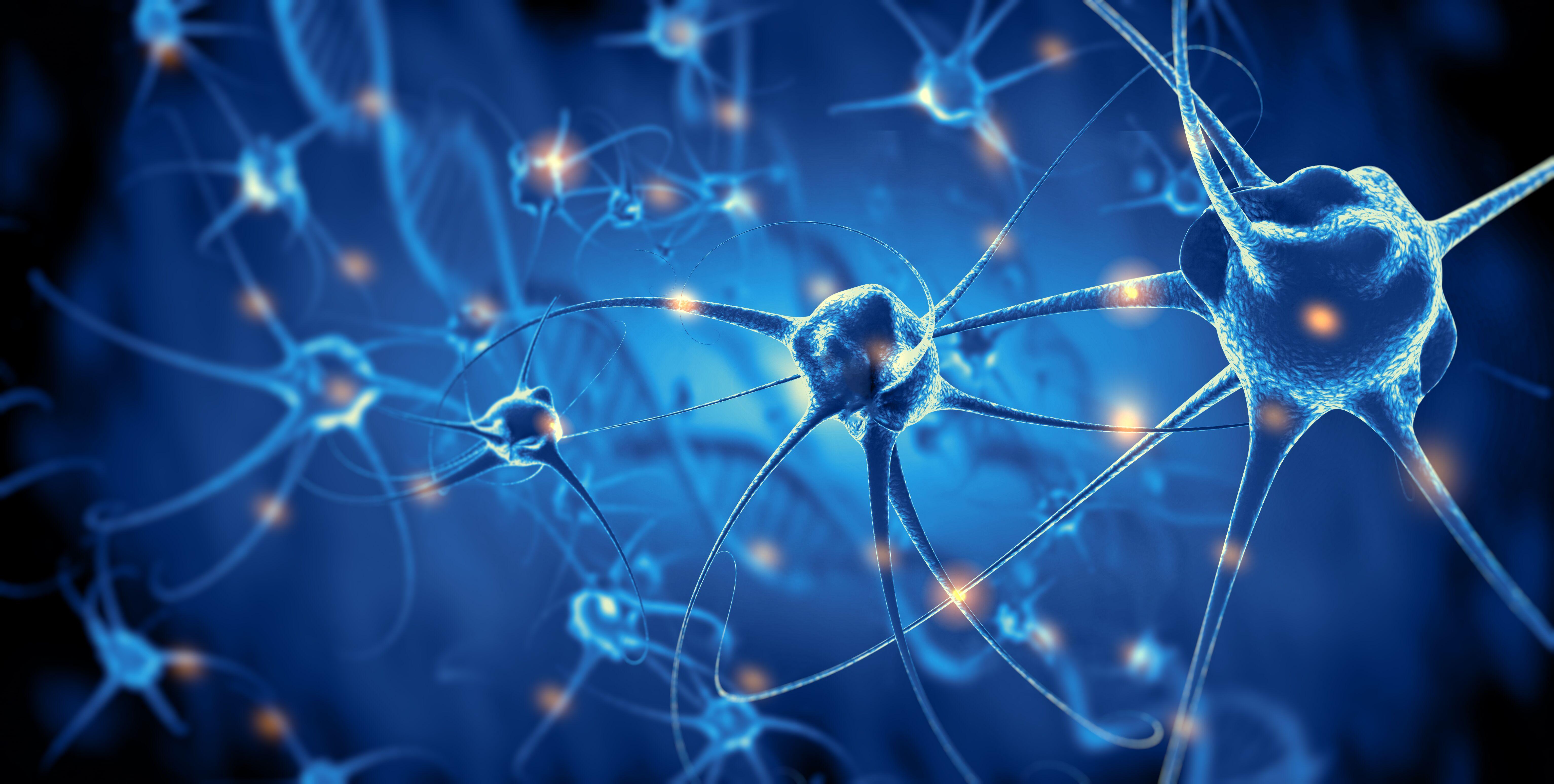 新研究揭示 成年後人類大腦神經元仍可再生