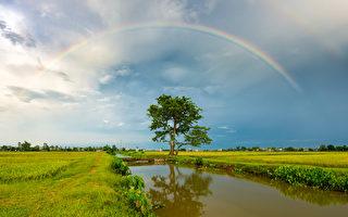 劃破中國精神病院黑幕的彩虹
