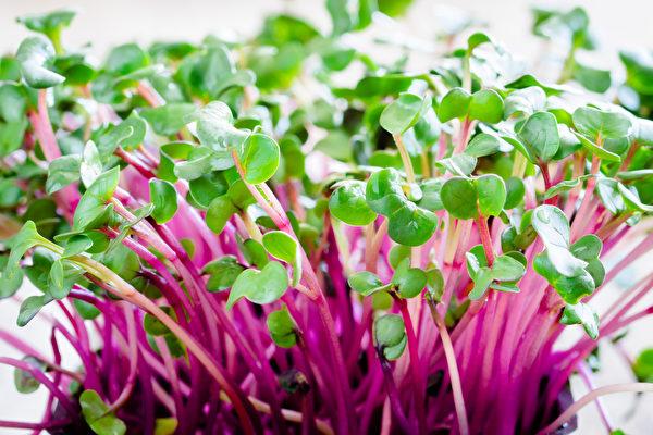 萝卜芽是理想的减肥食品。(shutterstock)