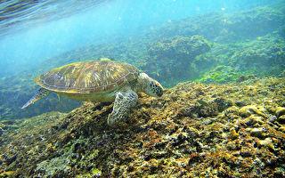 小琉球海龟遭刺杀 县府追查究办