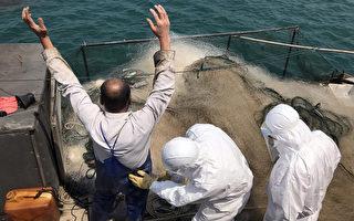 休渔期大陆两渔船越界捕捞 被马祖海巡查扣