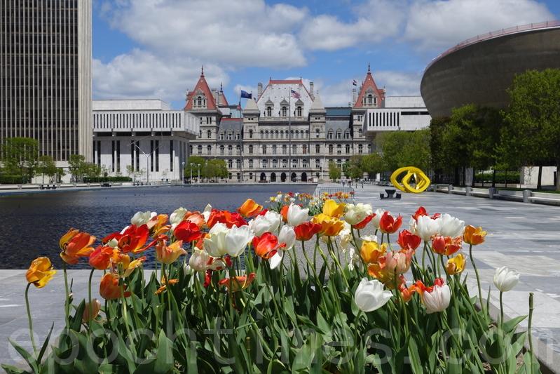 紐約州府鬱金香節繽紛燦爛