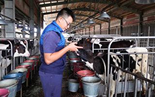 台酪农新世代落实动物福利 乳品惊艳日本业者