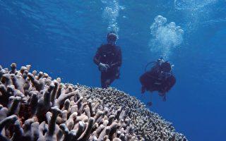 台湾青年冲绳当潜导 让游客爱上大海