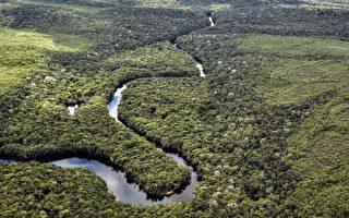 中国进口牛肉激增 消耗巴西亚马逊雨林?