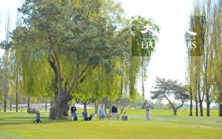 Musqueam高爾夫球場和練習場,位於溫哥華西南方,背靠菲沙河,是加拿大最好的高爾夫訓練設施之一。圖為高爾夫訓練場地。