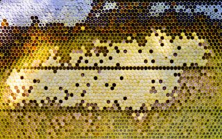 卧室嗡嗡声不断 西班牙夫妇与8万只蜂同住