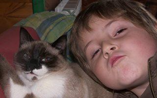 """疗愈系""""凯蒂""""猫 平复小主人闹情绪有妙招"""