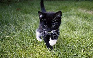 不能正常眨眼的小貓永遠微笑 還有個「大哥」作依靠