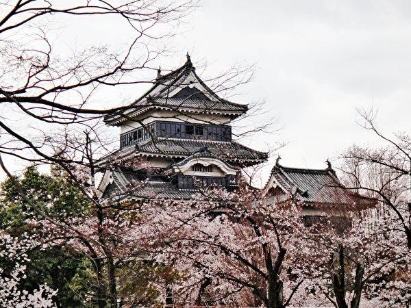 日本松本城櫻花綻放。(藍海/大紀元)