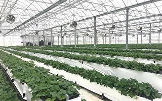 新農業時代 推動農業設施全面升級