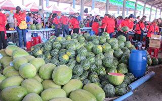 二崙西瓜節 一萬二千斤西瓜呷免驚