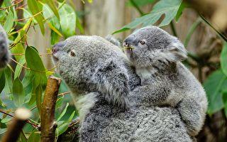 联合国报告:百万物种濒临灭绝 澳首当其冲