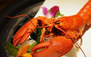 麻州放寬捕撈限令迎龍蝦季