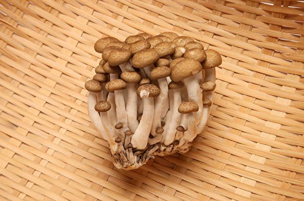 保存菇類時,注意千萬不要碰水。(Shutterstock)
