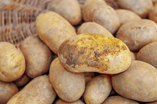 較大顆的馬鈴薯可放置陰涼黑暗處,小顆馬鈴薯則可放在冰箱冷藏。(Pixabay)