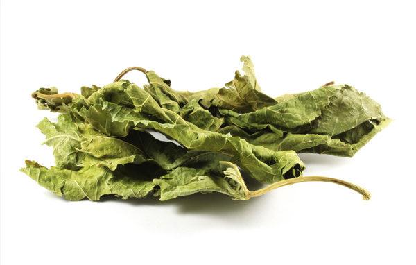 桑叶既可以食用,也能用来制成药物,有降血压、降血脂、抗炎的效用。(Shutterstock)