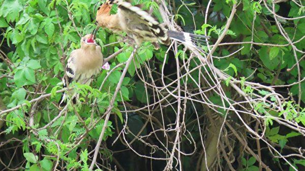 金門賞鳥趣 攝影師分想拍攝的豐富鳥類生態