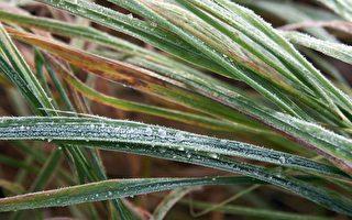 寒流袭击澳洲东南部 气温降至今冬最低
