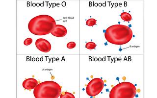 研究者找到A型血变为O型血方法