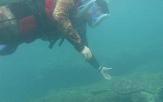小琉球潜客袭扰海龟 海巡署火速逮人