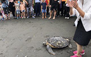 岳明國小師生歡送海龜重返大海 倡海洋保育