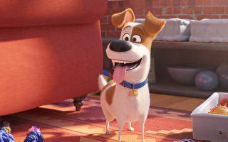 《寵物當家2》影評:趣味滿滿的誠意續作