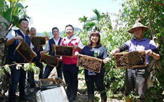 豪雨不斷絲瓜減半 野放授粉蜂提高結果率