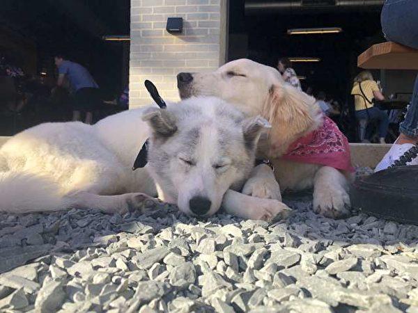 相亲相爱的两只小狗儿。(Courtesy of Karisa Maxwell)