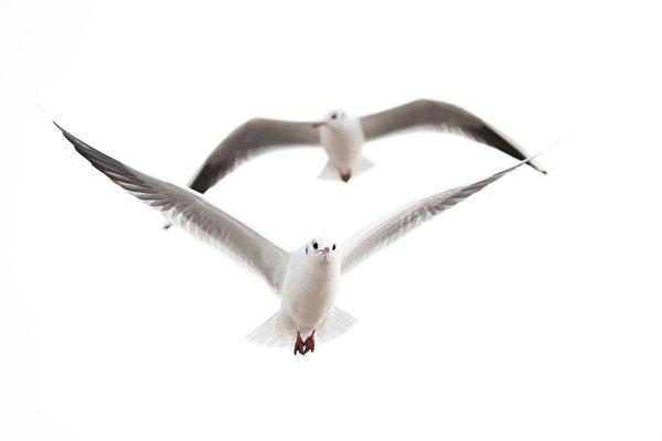 英國老夫婦遭海鷗「軟禁」在家6天
