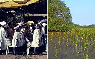 菲律宾新立法 学生要毕业 先种10棵树