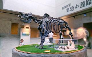 大開眼界 左鎮化石園區看古生物演化