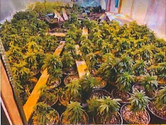 警员艾市商家抓贼 意外破获大麻屋
