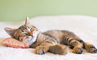 趣味英語: Cat nap像貓一樣小睡一會兒