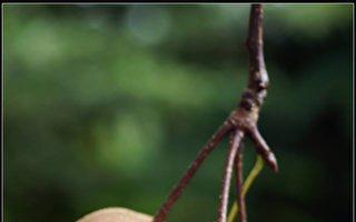 【无鱼坊的摄影心视界】糖葫芦山楂果
