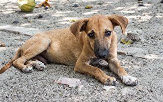 非洲旷野历险求救 瘫痪小狗完成不可能任务
