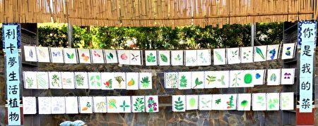 利嘉国小学生手绘的部落植物。