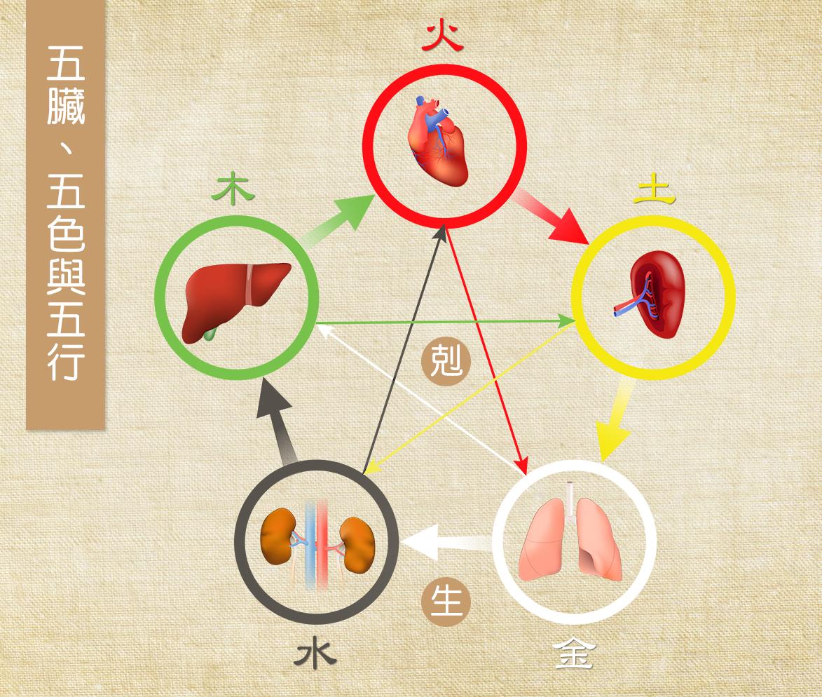 中醫的五行學說將五色「青、赤、黃、白、黑」,歸屬於「肝、心、脾、肺、腎」等五臟,就是以五色食物補五臟;青色入肝,紅色入心,黃色入脾,白色入肺,黑色入腎。(Shutterstock/大紀元製圖)