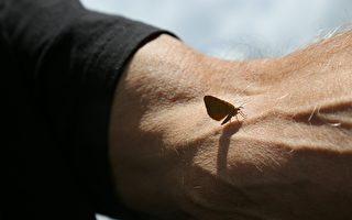 妈妈预言将化成黄蝴蝶 9年后她真来看儿子了