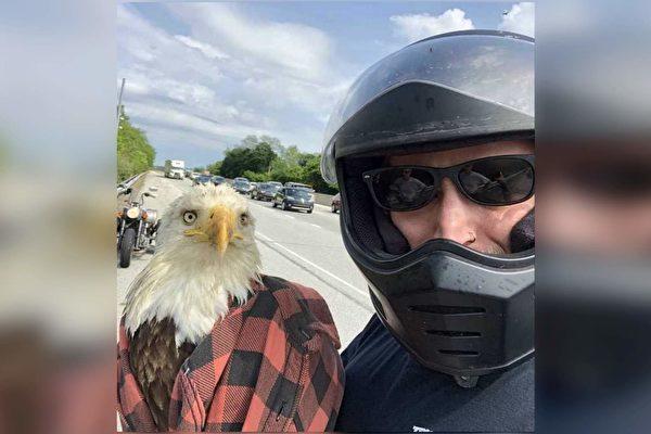 受了輕傷的白頭鷹在救命恩人懷裡非常溫順。(Courtesy of Dandon Miller)