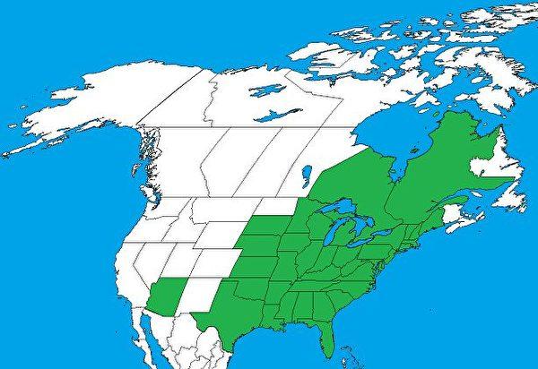 毒藤在北美的分布情况。(公有领域)