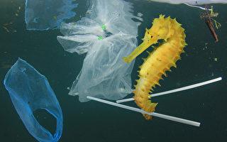 加拿大計劃禁用塑料袋 徵詢民眾意見