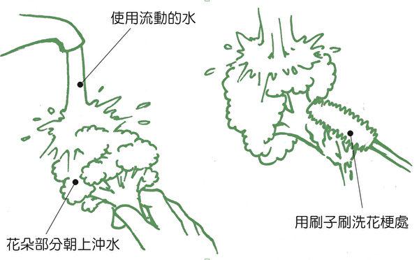 花椰菜、青花菜的正確清洗方法,去除農藥殘留。(《正確洗菜,擺脫農藥陰影》/大紀元後製)