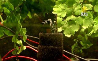 植物也会自拍!英国微生物燃料电池新实验