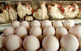 大陸豬肉價一週漲11% 雞蛋價也飆升14%