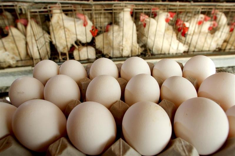 「火箭蛋」來襲 大陸蛋價仍有上漲空間