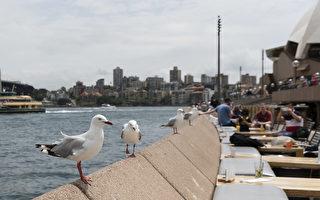 逾20%海鸥携带超级细菌 可通过鸟粪传给人