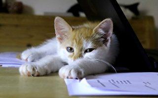 小浪貓入住辦公室 「借記」「信用」幫員工紓壓成網紅