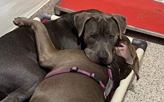 阿加莎(Agatha)是隻棄犬,而點唱機(Jukebox)則是流浪狗。 毫無瓜葛的兩隻小狗,卻在第一次見面後,就成為彼此最佳的夥伴。(Courtesy of Pima Animal Care Center)